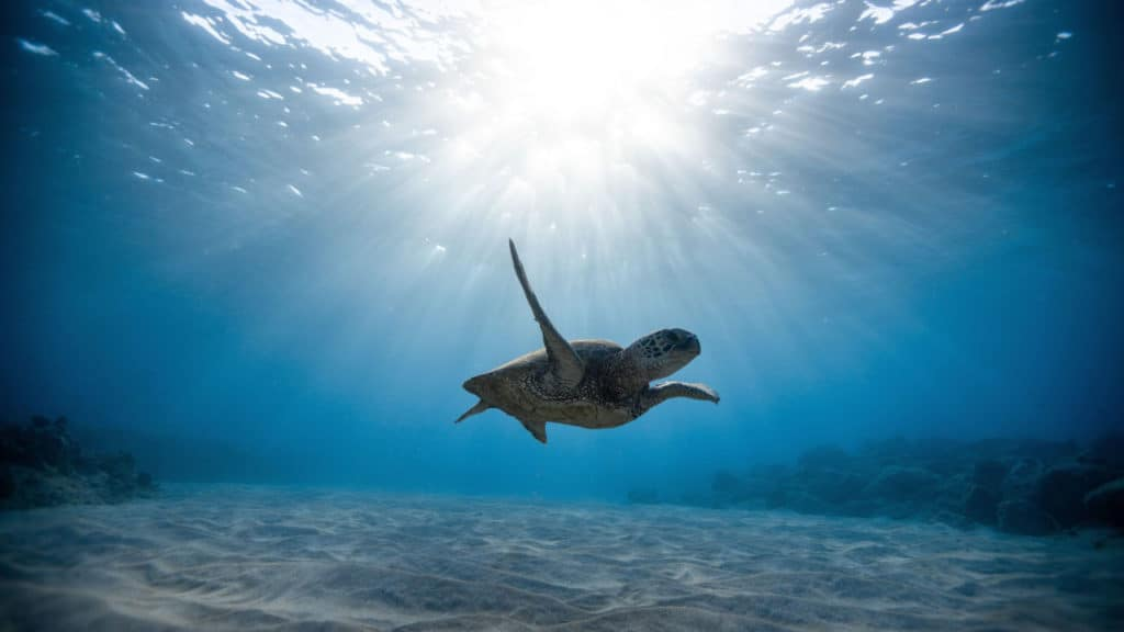 Image of a lonely turtle