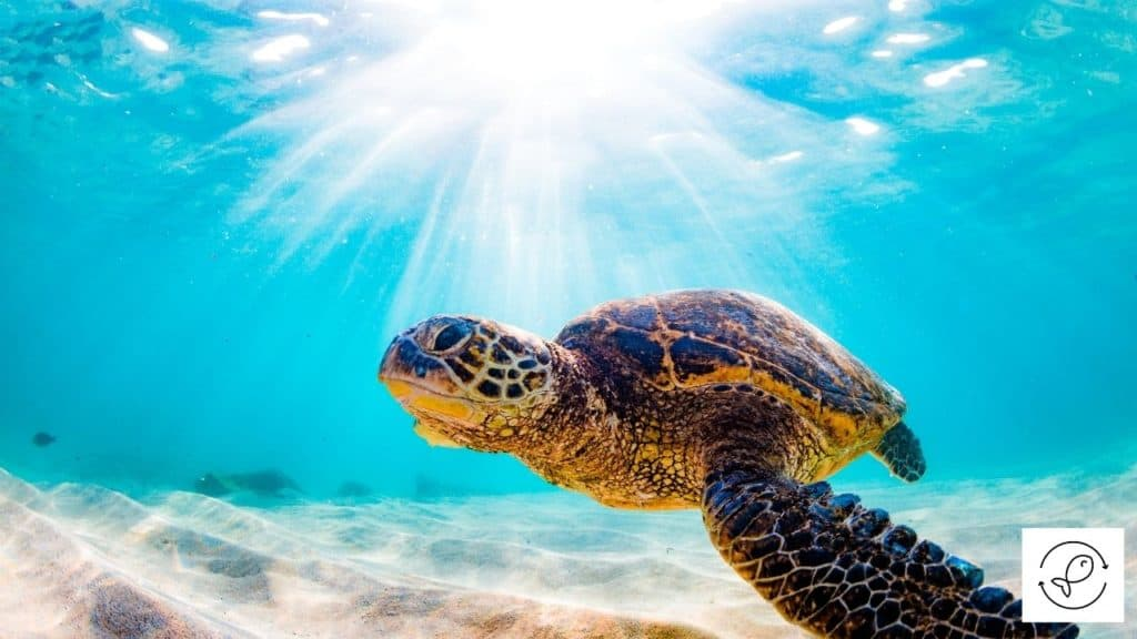 Image of a turtle swimming