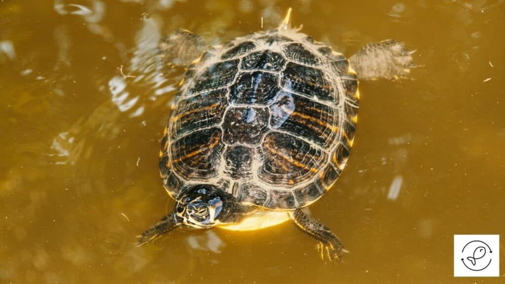 Image of a floating turtle