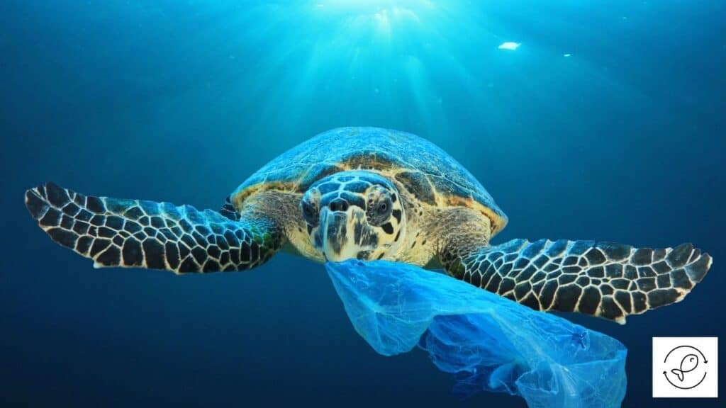 Image of a turtle eating plastic