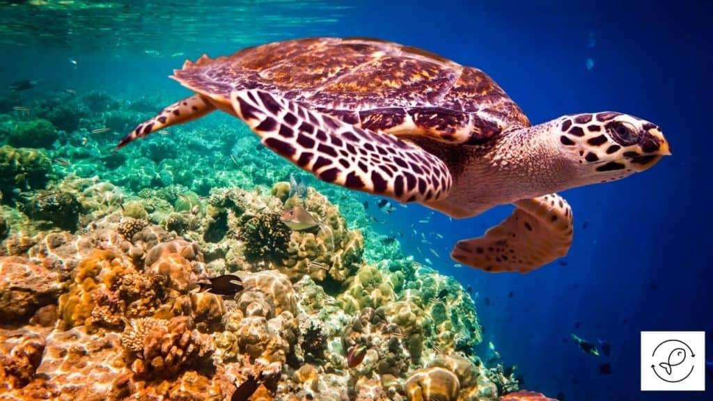 Image of a turtle swimming inside a sea