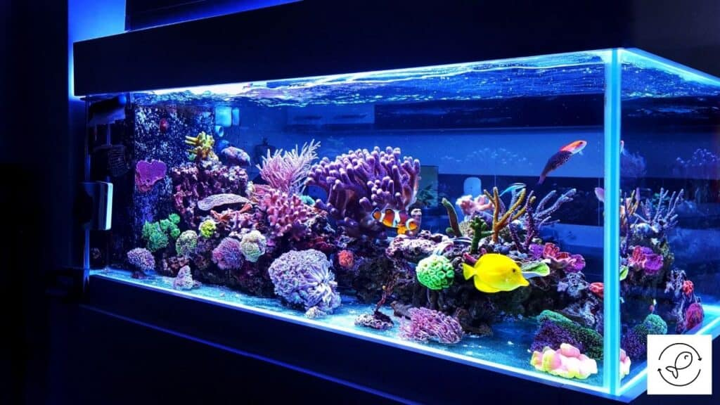 Image of an aquarium with tempered glass