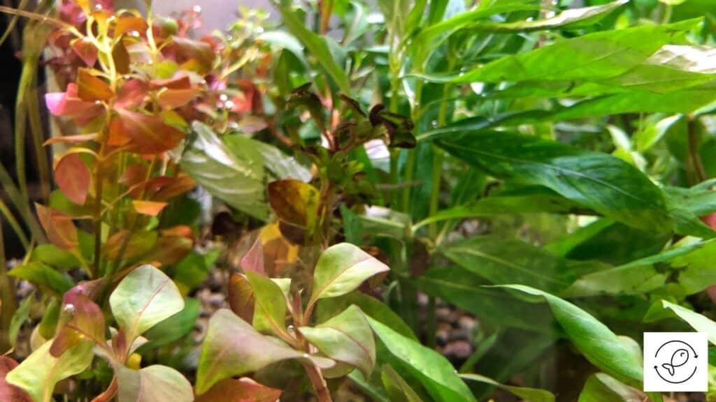 Image of aquarium plants breathing CO2