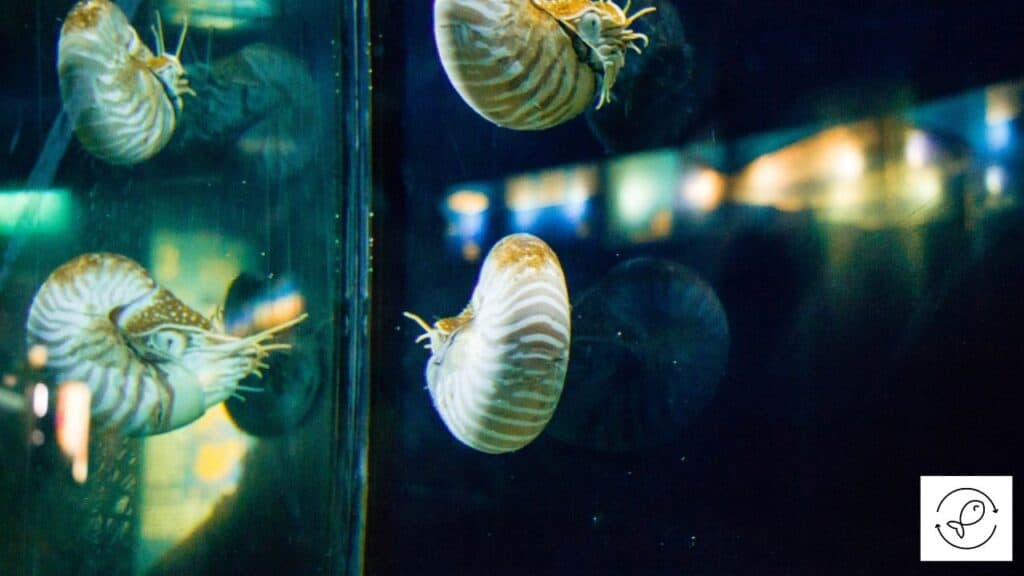 Image of floating aquarium snails