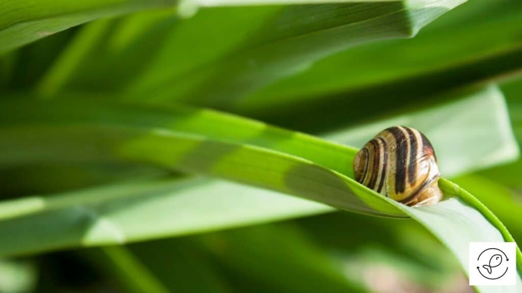 Image of a snail sitting on plant leaf