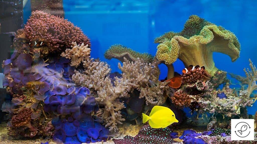 Image of aquarium water with salt
