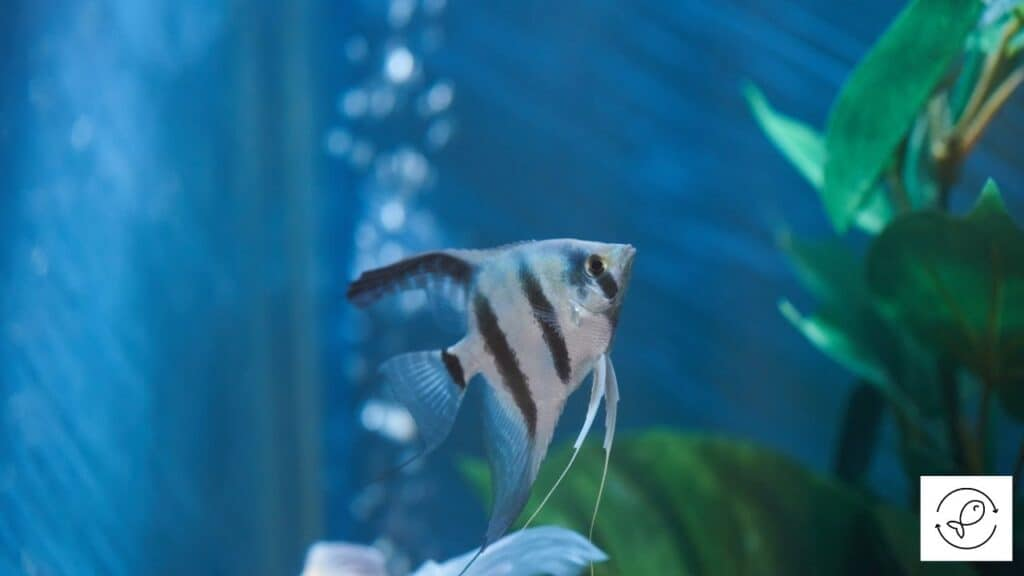 Image of a fish swimming in aquarium water
