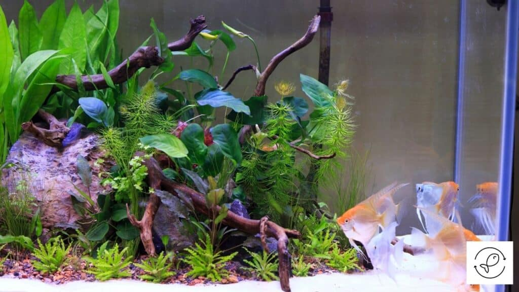 Image of plants in an aquarium