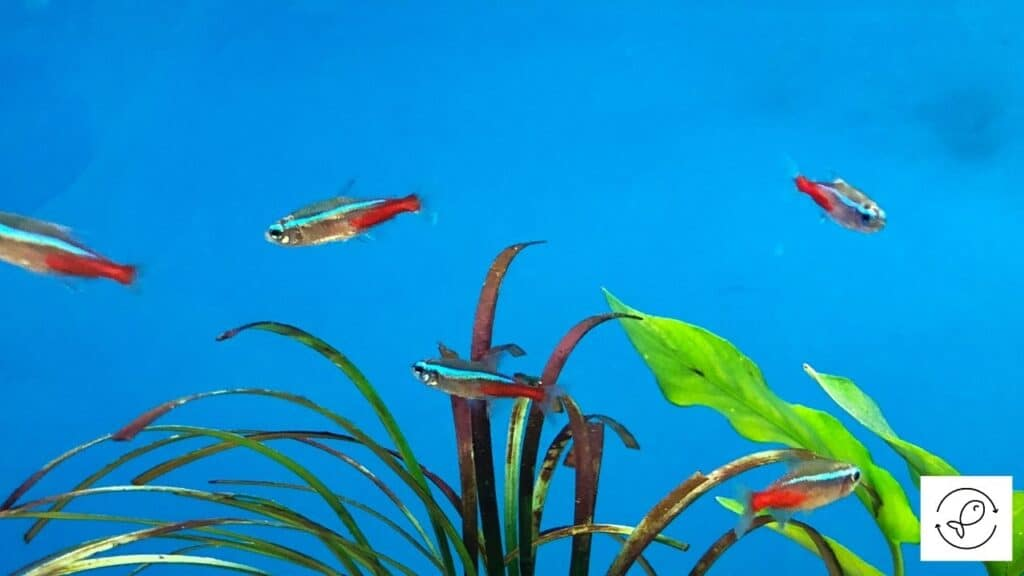 Image of tetras swimming in mild current