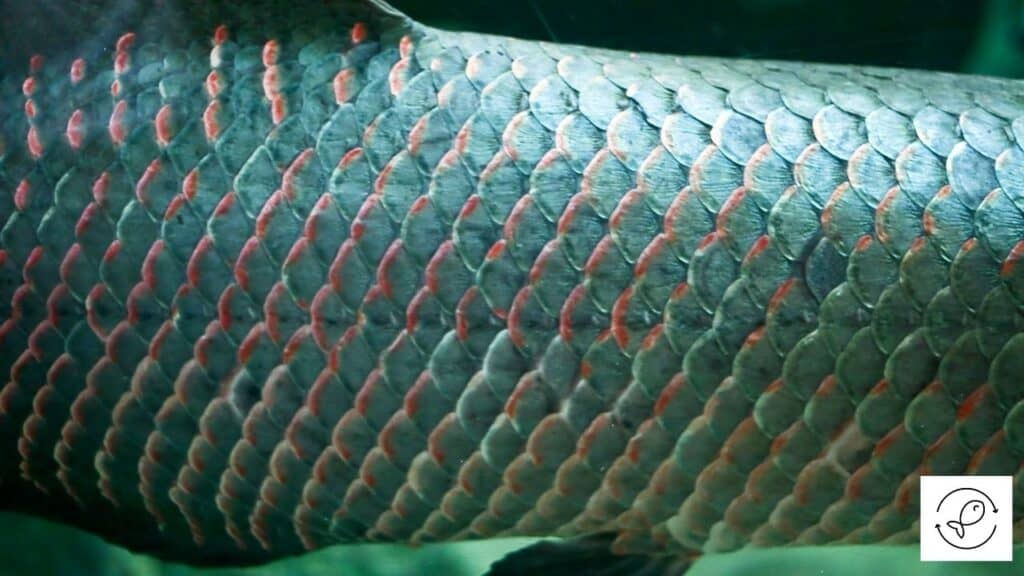 Image of fish scales