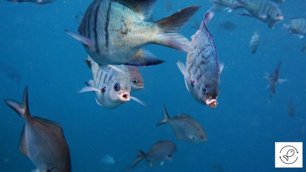 Image of fish with mouth wide open