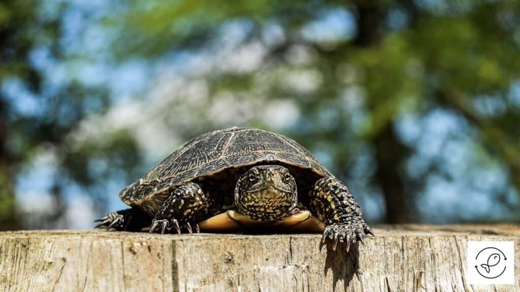 Image of a turtle moving slowly
