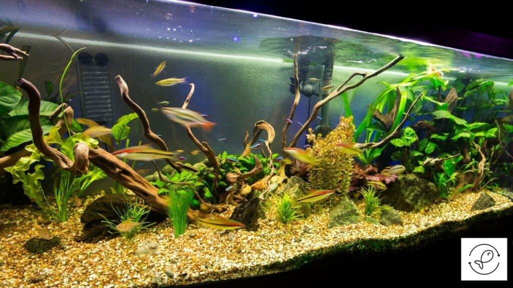 Image of an aquarium using Purigen