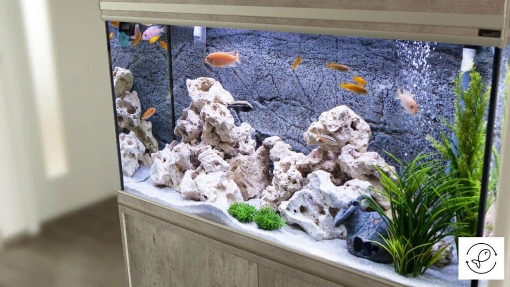 Image of an aquarium with internal filter