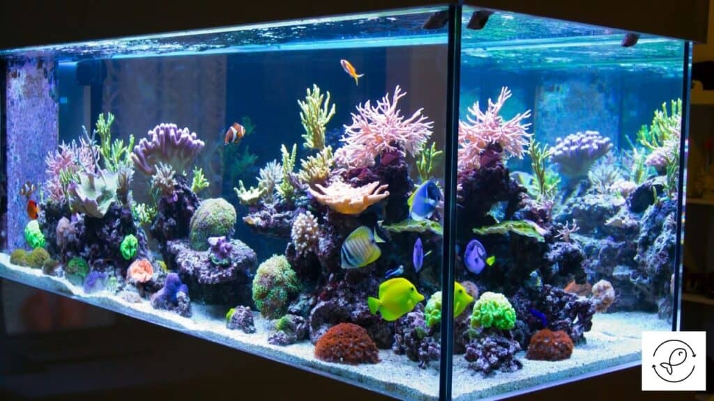 Image of an aquarium with soft water