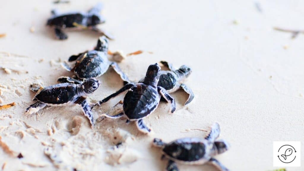 Image of baby turtles