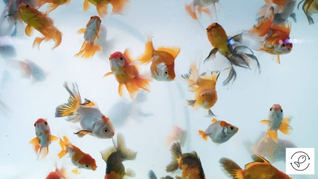 Image of fish in cloudy fish tank