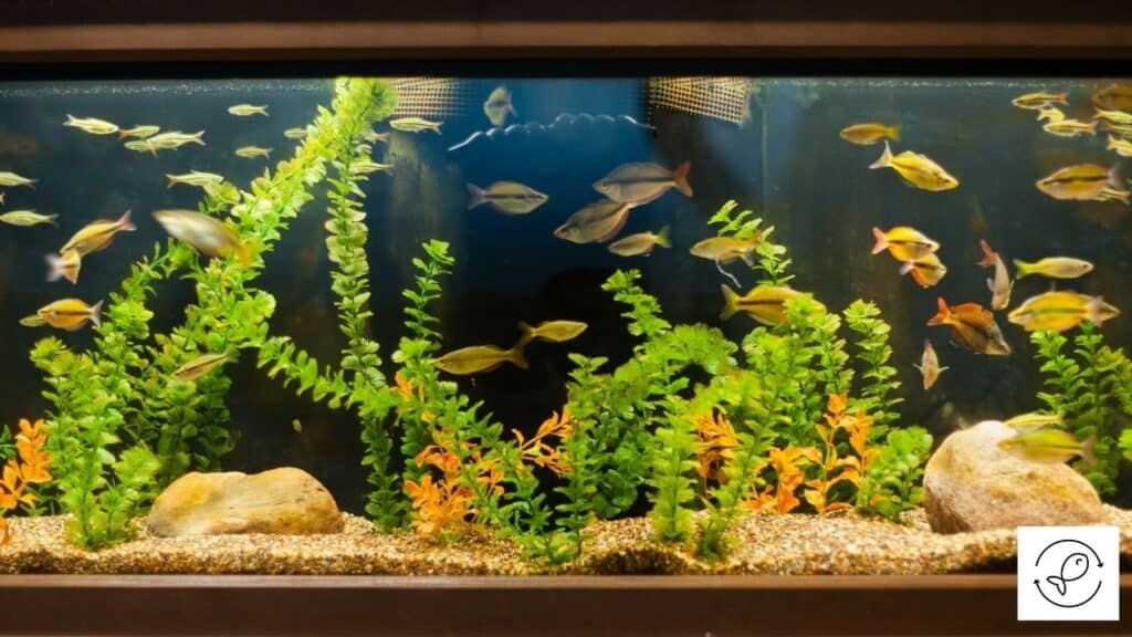 Image of a fish tank with a filter