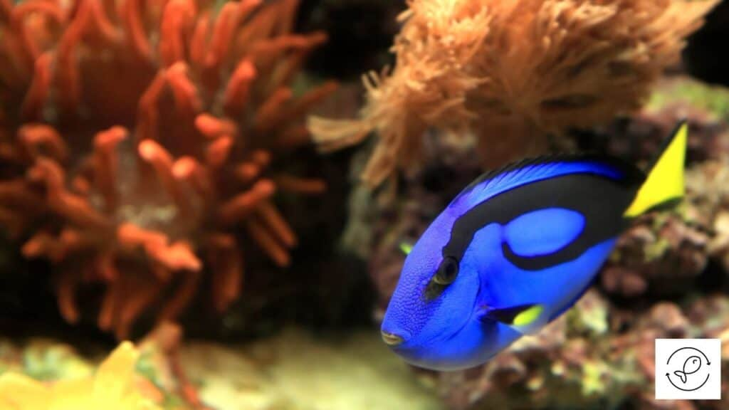 Image of a saltwater tank with plants