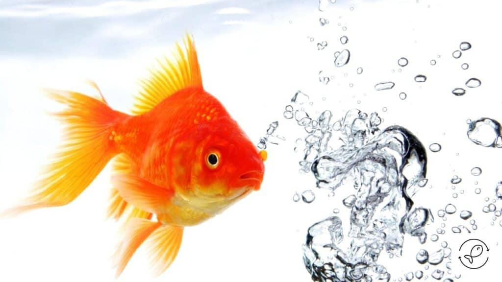 Image of goldfish at the top of the water
