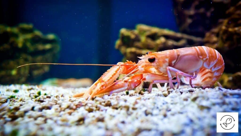 Image of a shrimp in an aquarium