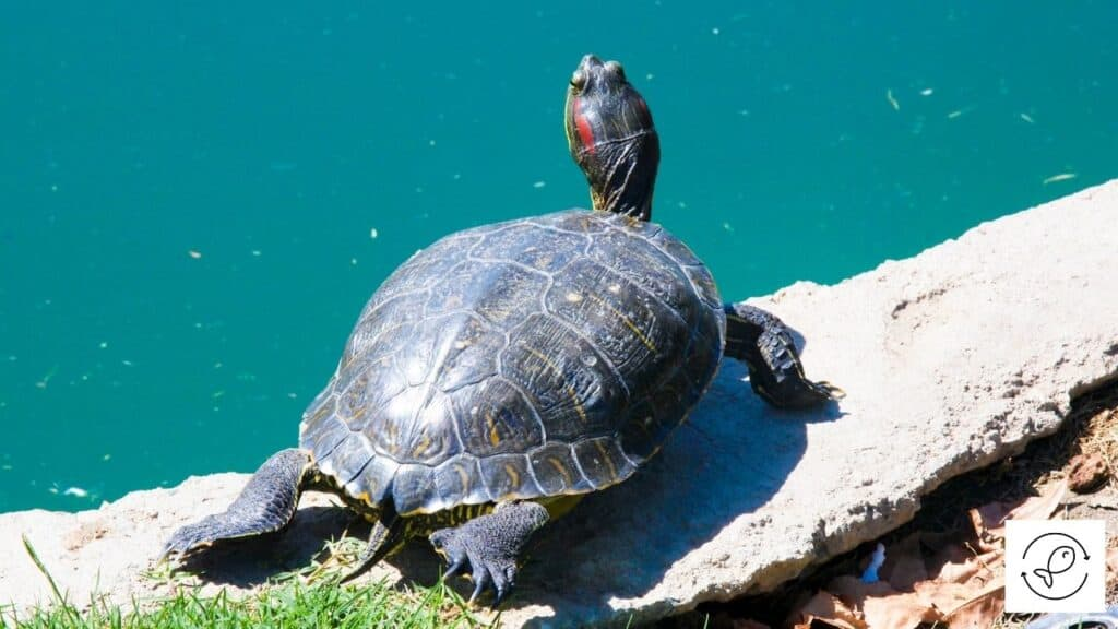 Image of an old turtle