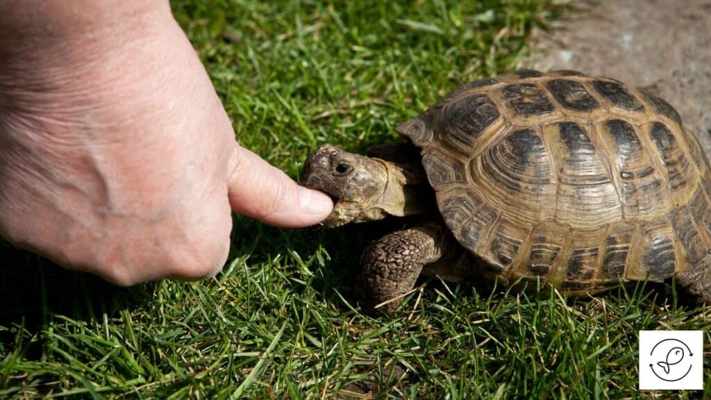 Image of a turtle attacking a human