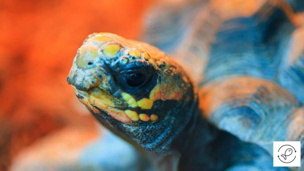 Image of a turtle basking under a heat lamp