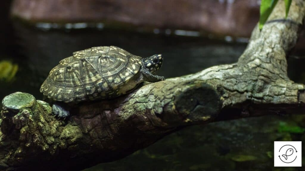 Image of a turtle climbing a tree