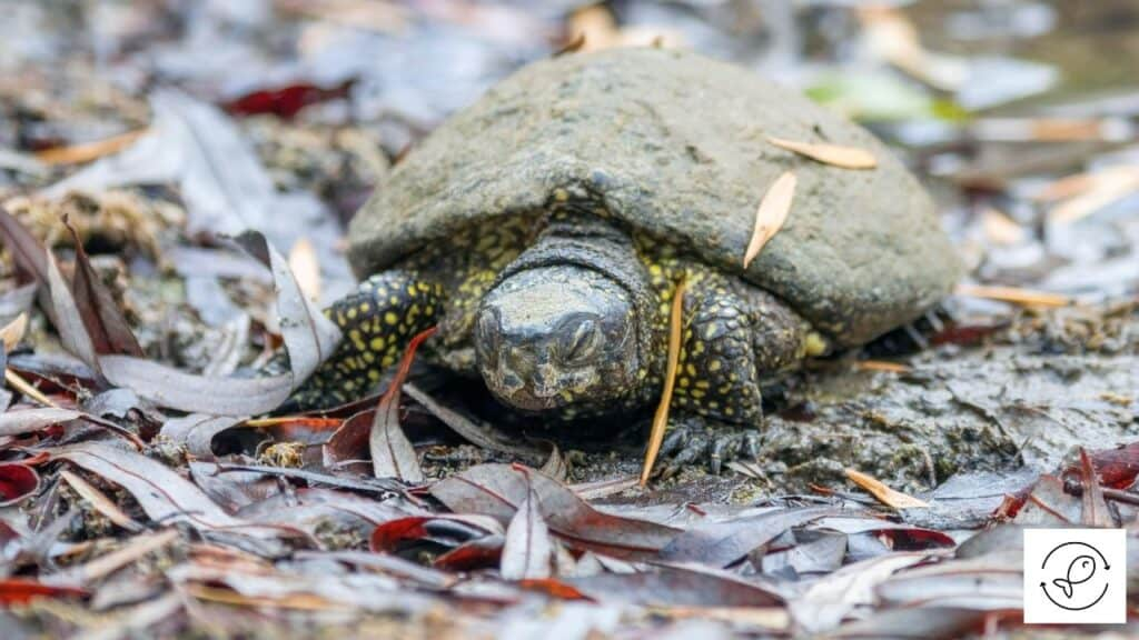 Image of a turtle feeling cold