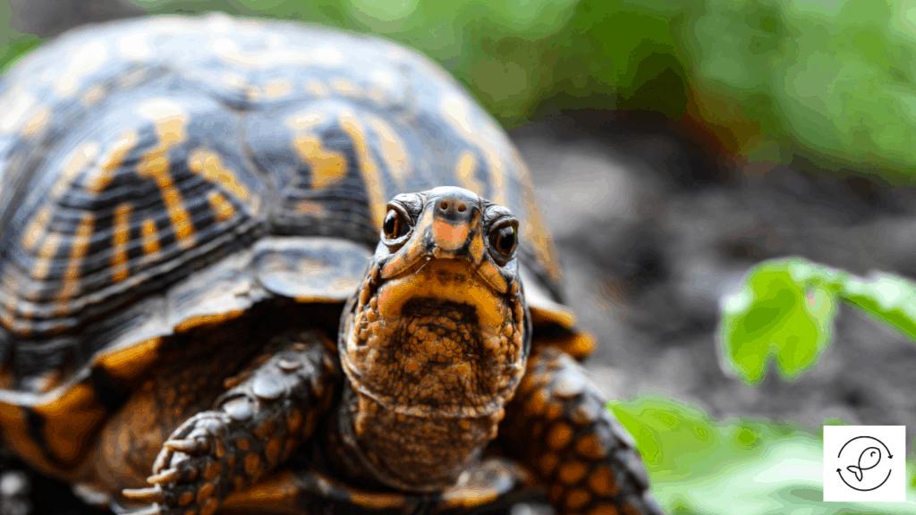 Image of turtle looking ahead
