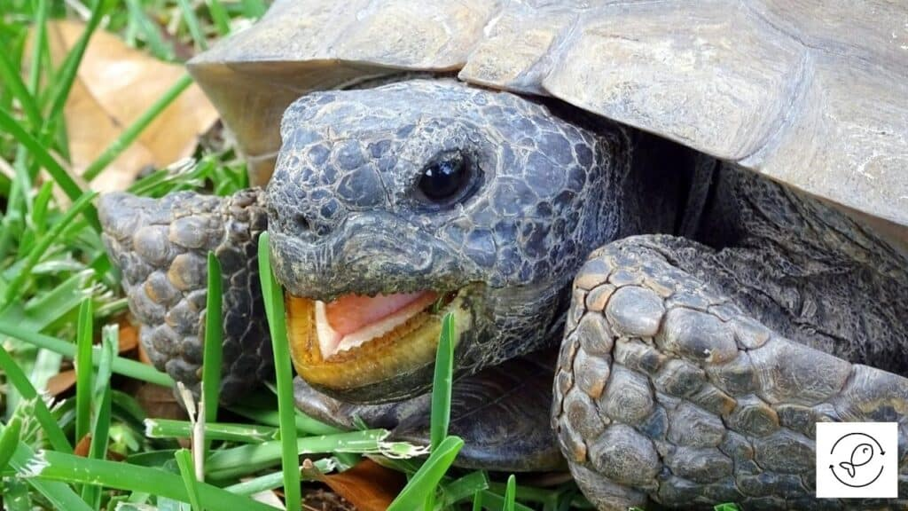 Image of a turtle making noise