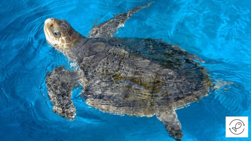 Image of a turtle swimming in a tank with a filter