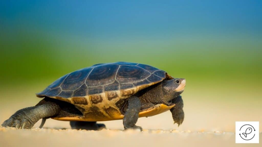 Image of a turtle with scales