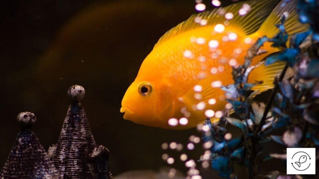 Image of an air pump creating bubbles in an aquarium