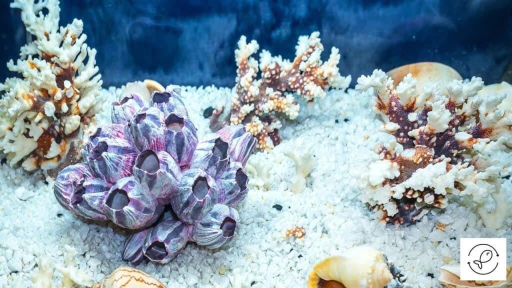 Image of aquarium decorations turning brown