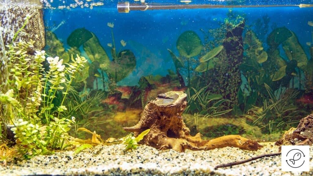 Image of driftwood kept in an aquarium