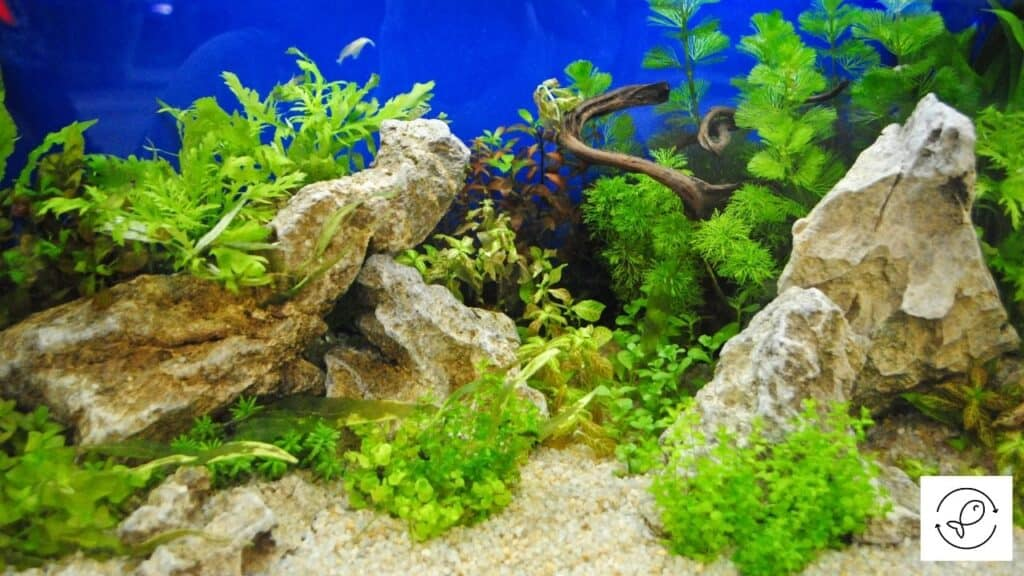 Image of too many decorations in an aquarium