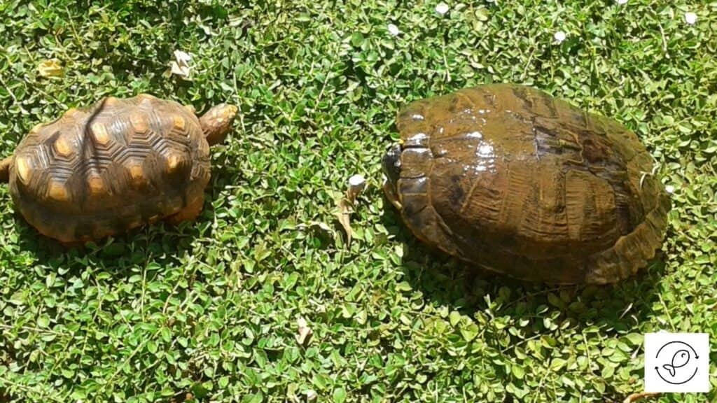 Image of a turtle and a tortoise