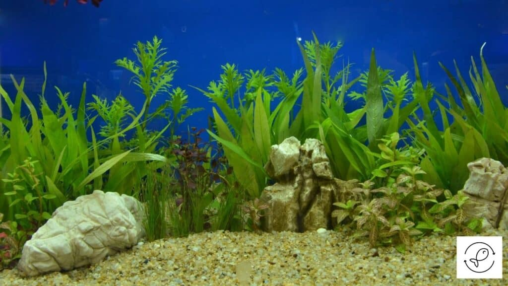 Image of an aquairum with gravel and plants