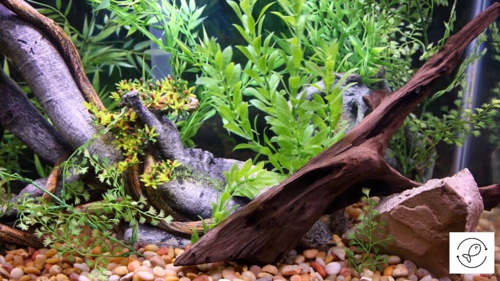 Image of aquarium driftwood that does not rot
