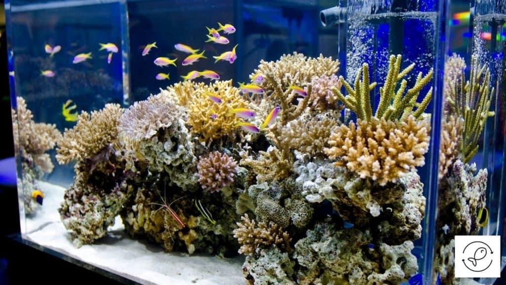 Image of an aquarium made of glass