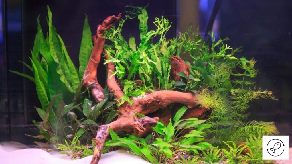 Image of aquarium plants glued to substrate