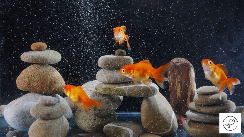 Image of aquarium rocks glued together