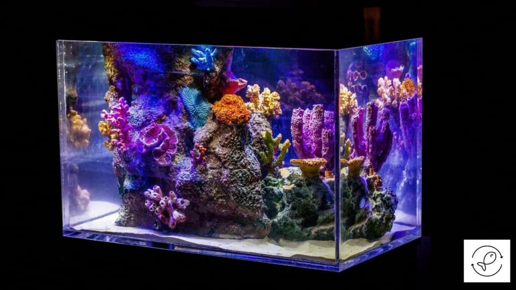 Image of an aquarium with thick glass